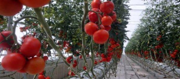 pvc borusunda bitki